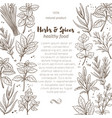 sketch herbs and spices vector image vector image