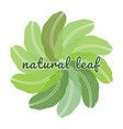banana natural green leaf logo vector image vector image