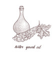 drawing bitter gourd oil vector image