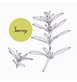 Hand drawn savory branch with leves isolated on vector image