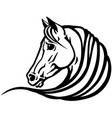 head white horse vector image vector image
