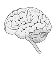 structure human brain schematic vector image
