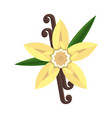 vanilla flower with stitch and leaves spice for vector image vector image