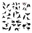 big set of wild birds silhouettes vector image