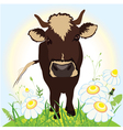 Cow on green field grass and flowers vector image