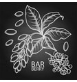 graphic barberry set vector image