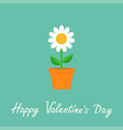 happy valentines day daisy in red pot camomile vector image vector image