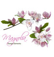 magnolia branch and bouquet isolated spring flower vector image