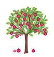 pomegranate tree vector image vector image