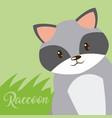 raccoon cute animal cartoon vector image vector image