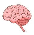 Structure of human brain schematic vector image vector image