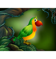 A parrot at the rain forest vector image vector image