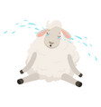 cute sad white sheep character crying funny vector image vector image