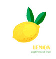 fresh lemon isolated on white background vector image vector image