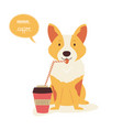 funny corgi dog having a cup coffee vector image