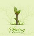 spring twig vector image vector image
