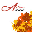 autumn season maple leaves fall background vector image vector image