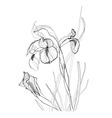 Iris flowers vector image vector image
