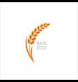 premium rice great quality design concept vector image