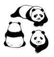 set hand drawn pandas vector image