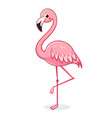 cute pink flamingo on a white background vector image