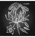 graphic cumin set vector image