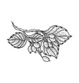 dog rose with leaves sketch engraving vector image