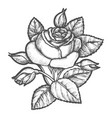 rose flower drawn in vintage sketch style vector image vector image