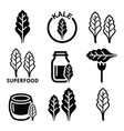 Superfood - kale leaves icons set vector image vector image