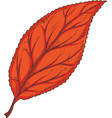 red dried beech leaf vector image vector image