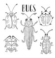 beetle collection beetles and bugs vector image