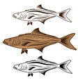 cod fish design template vector image vector image