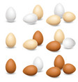 egg set on a white background vector image vector image