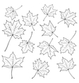maple leaves vector image vector image