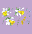 set of different flowers of narcissus hand drawn vector image vector image