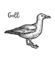 sketch european herring gull hand drawn gull vector image vector image