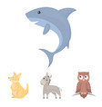 donkey owl kangaroo sharkanimal set collection vector image