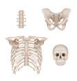 human skeleton skull and bones anatomy for vector image