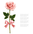 Single pink rose with bow isolated on white vector image vector image