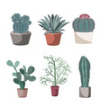 succulent and cactuses in flower pots prickly vector image