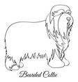 bearded collie coloring vector image vector image