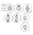 process of cell division vintage vector image vector image