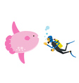 Scuba diving with sunfish vector image