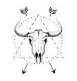 skull bull with horns vector image