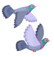 two pigeons flying isolated vector image vector image