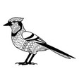 bird natural feather fauna animal vector image vector image
