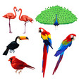 different type of birds vector image