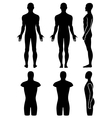 Male mannequin outlined silhouette torso vector image