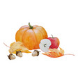 pumpkin and acorns composition vector image