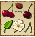 Cherry icon set berry flower and more six items vector image